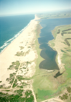 The sand barrier between Laguna de Rocha and the Atlantic Ocean.