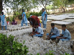 Employees in the tree nursery