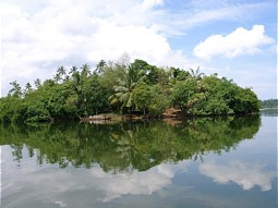 Riverine vegetation in Sri Lanka
