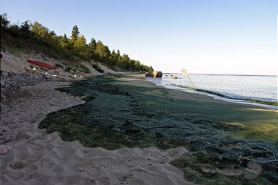 Algea cover the shore lines of Lake Winnipeg