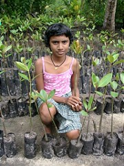 Girl with young mangrove seedlings