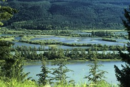 Columbia River Wetlands im Sommer