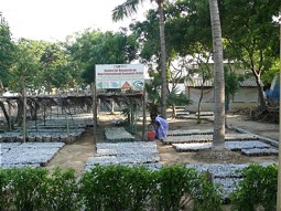Tree nursery at the Pulicat Lagoon