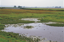 Ponds and wetlands with waterfowl
