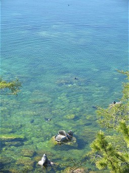 Clear water as habitat for the Baikal Seals