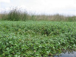 Expansion of invasive water plants