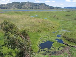 Wetlands and reed areas at the shores