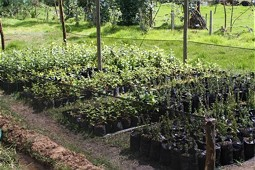 Seedlings of native plants in a tree nursery