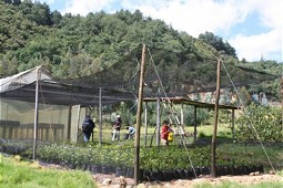 Expansion of the tree nursery
