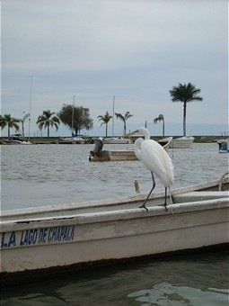 Egret at a fisher boat