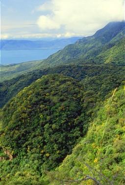 Vegetation at the mountain sides at Lake Chapala