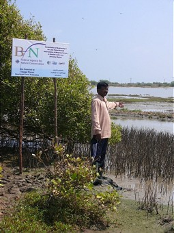 Mangrove plants in the project area