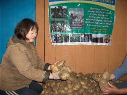 Potatoes of own cultivation
