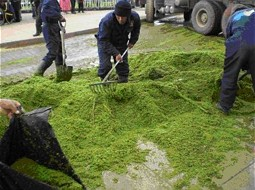 Extraction of Duckweed