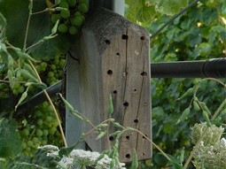 Insect hotels help the vineyard.