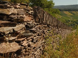 Stone walls provide a protected habitat for many animals.