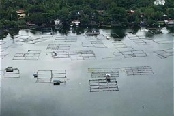 Lake Sampaloc: Detail of the fish cages