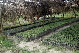 Tree nursery with seedlings
