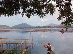 Idyllic surrounding of Lake Sampaloc